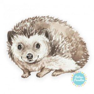 poduszeczka hedgehog